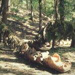 Domenica 15 ottobre - Il sentiero dei Guardiani del Bosco (CO)