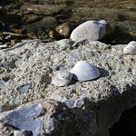 (Italiano) Coming Soon - Cercando Fossili sul torrente Stirone
