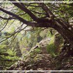 La vita degli alberi nelle parole di Mauro Corona