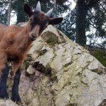 (Italiano) 7 dicembre - Sopra il Lago di Lugano con pranzo insieme all'ultima pastora della Valceresio